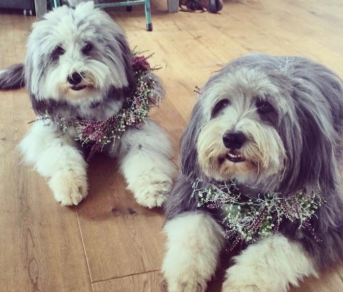 Hochzeitsfloristik Hunde
