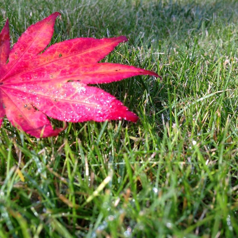 Dünger Rasen