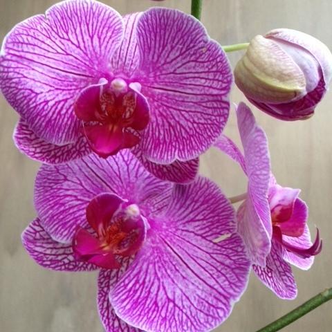Orchideen 1