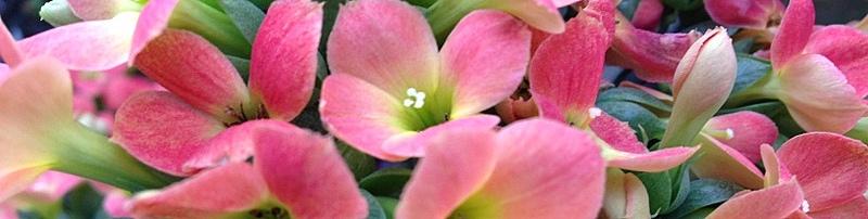 Blühende Pflanzen Header