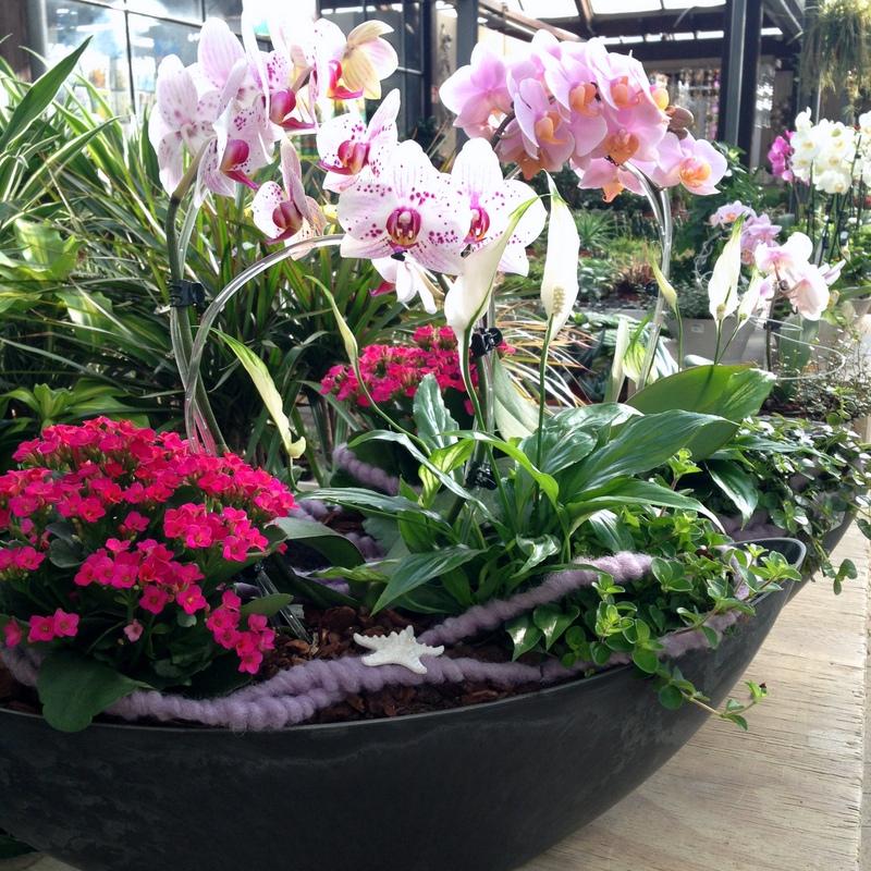 Zimmerpflanzen Pflanzschalen