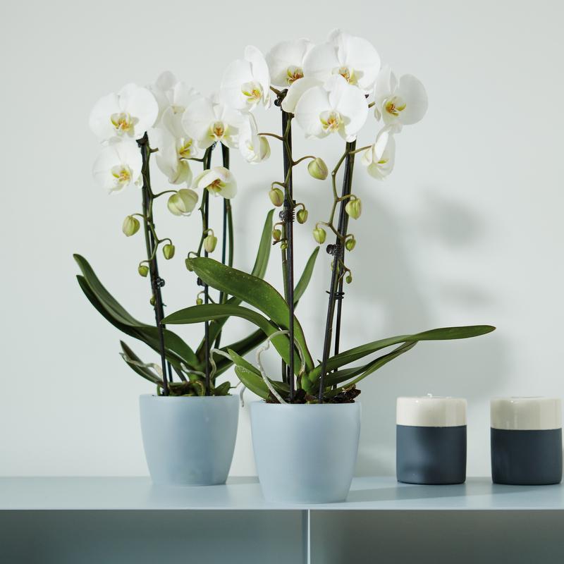 elho Orchideentöpfe