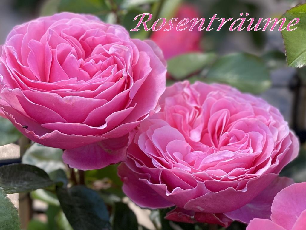 Rosenträume im Blumenparadies